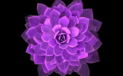 Los mandalas: una herramienta para el crecimiento espiritual.