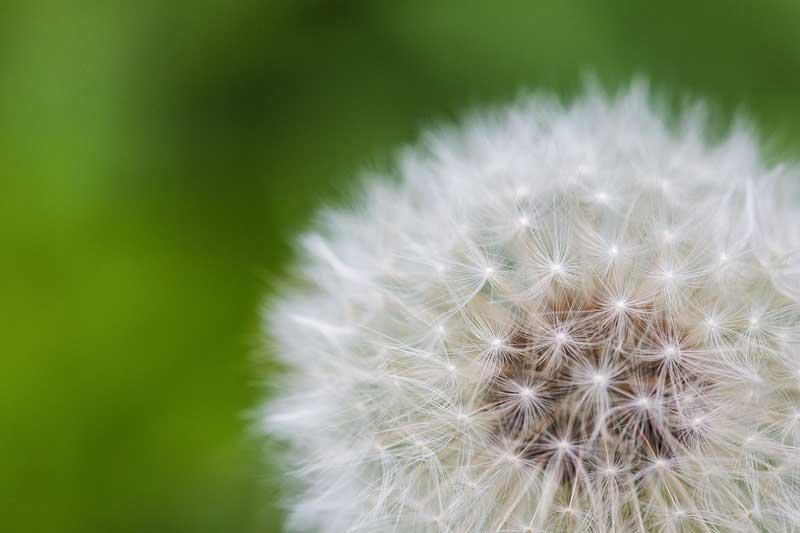 flor de la vida naturaleza