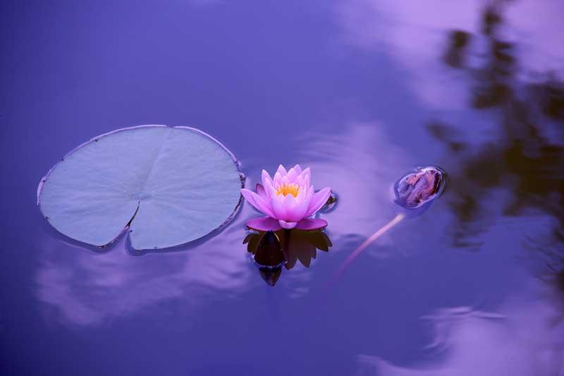 meditación loto