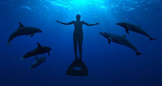 delfines comunicación