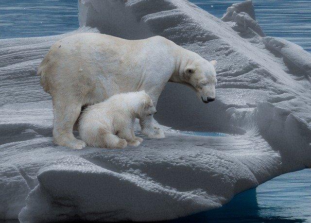 calentamiento global polos