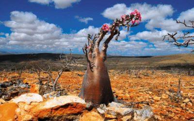La Isla de Socotra: uno de los lugares más misteriosos y energéticos de la tierra