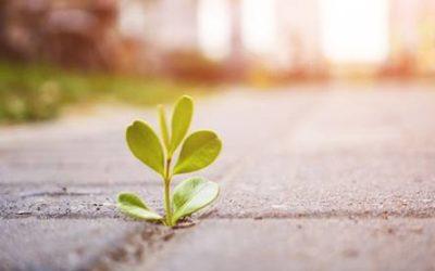 La resiliencia: una cualidad a desarrollar