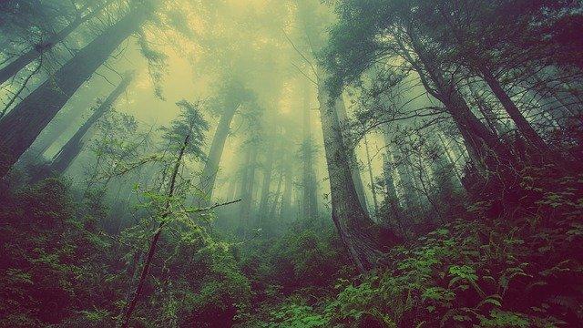 capacidad regenerativa de la naturaleza