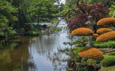 La naturaleza y su poder sanador y armonizador