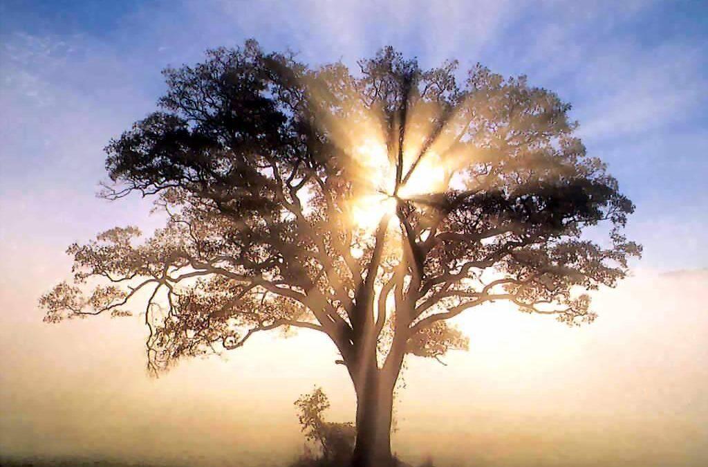 El árbol de la vida como parte de la geometría sagrada