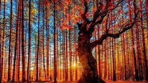 bosque santuario Belintash